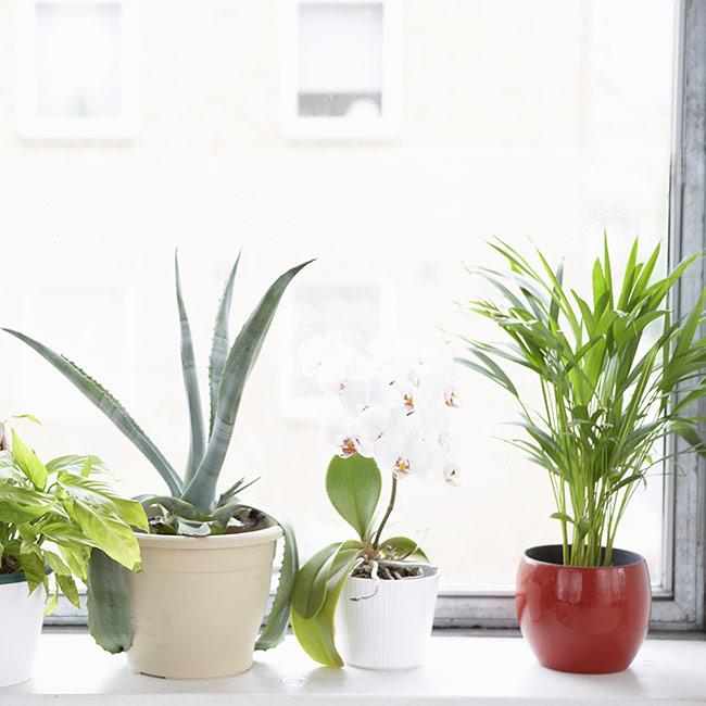 types-of-plants-best-for-windowstills-FT