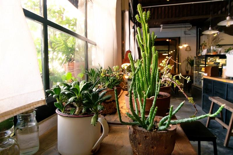Tips for Growing Companion Houseplants