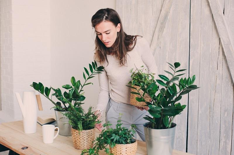 Tough to Grow Houseplants